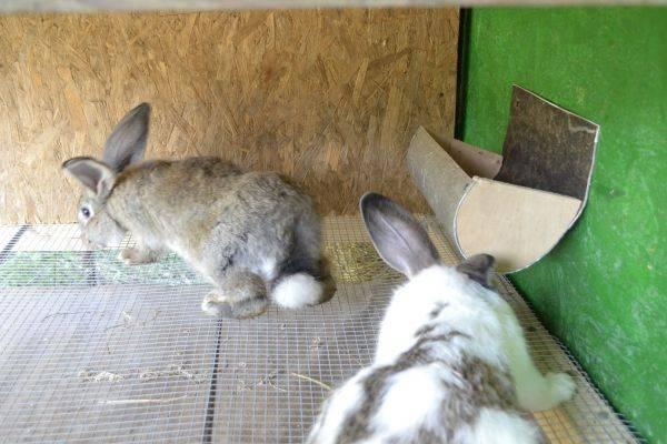 Продаю кроликов на племя. Бахчисарайский район, село Голубинка.