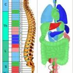 Метод накатани аппарат пересвет. диагностика организма риодораку