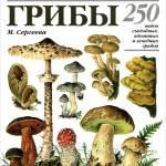 Фото Грибы. 250 видов съедобных, ядовитых и лечебных грибов... Москва Интернет-магазин
