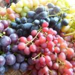 Фото Саженцы винограда Мускат Ливадия, Россия... Повсеместно Посадочный материал : виноград,