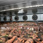Фото Овощехранилища с холодильной установкой для хранения овощей... Повсеместно КрымХолодСервис